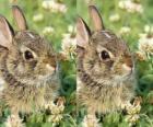 coniglio timido