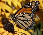 farfalla su un fiore giallo