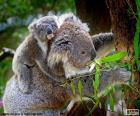 Koala arrampicarsi su un albero