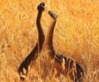 Serpenti nel campo