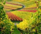 paesaggio autunnale nella Vigna