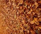 Foglie cadute a terra, una tipica immagine di autunno