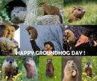 Il giorno della marmotta è una festa che si celebra negli Stati Uniti e in Canada il 2 febbraio