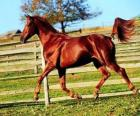 Bella cavallo
