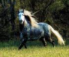 Bel cavallo con la criniera lunga e lunga coda