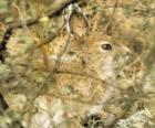 Il pennello coniglio