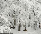 Foresta completamente nevicato