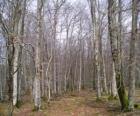 Foresta senza foglie in inverno