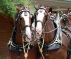Due cavalli da tiro