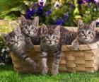 Quattro gattini in un cesto