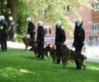 Agenti della polizia antisommossa con i cani