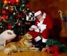 Diversi animali con Babbo Natale