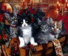 Gattini il giorno di Natale