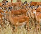 Le gazzelle
