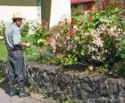 Giardiniere annaffia in primavera