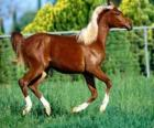 Elegante cavalli giovani