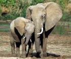 Mamma controllare il piccolo elefante con l'aiuto della sua proboscide