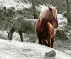 Cavalli al pascolo nel settore