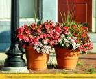 Fiori in un vaso o fioriera