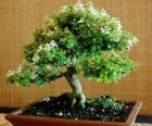 Bonsai albero, albero in miniatura in un vassoio secondo l'arte giapponese di bonsai