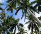 Palme tropicali