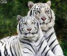 Tigri bianche del Bengala