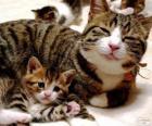 Mama gatto con il suo gatto bambino