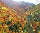 Foresta in colori autunnali