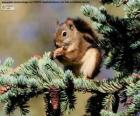 Scoiattolo rosso su un albero