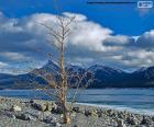 Un albero morto vicino al lago