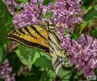 Farfalla tigre del Canada