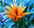 Fiore arancio esotico