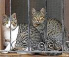 Due gatti in una finestra