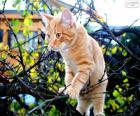 Un gattino in un albero