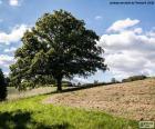 Albero nel campo arato