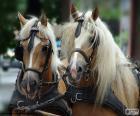 Cavalli di cambiale