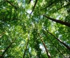 Cime degli alberi