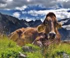 Mucca in riposo