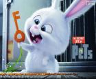 Snowball, un coniglio bianco