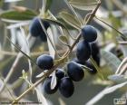 Ramo d'ulivo nero