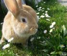 Coniglio in primavera