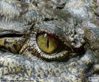 Occhio del coccodrillo
