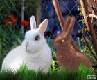 Coniglio bianco e cioccolato