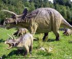 Triceratopo erano erbivori, con una grande testa con tre corni, uno sul muso e due grandi corna sopra gli occhi