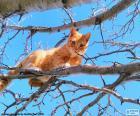 Gatto su un ramo