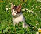 Gatto nel campo