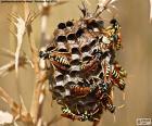Sciame di vespe