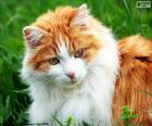 Un gatto elegante