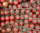 Pomodoro nel ramo