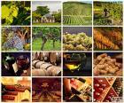 Collage di vino